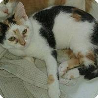 Adopt A Pet :: Cali - Wauconda, IL