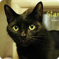 Adopt A Pet :: Starlight - Hamilton, ON