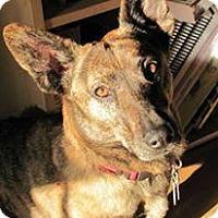 Adopt A Pet :: Tasha - Waldorf, MD