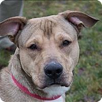 Adopt A Pet :: Dilbert - Duluth, MN