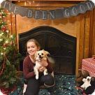 Adopt A Pet :: Timothy