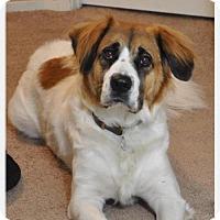 Adopt A Pet :: Coco - Mission Viejo, CA