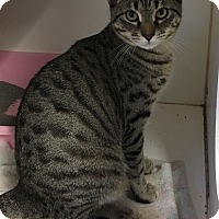 Adopt A Pet :: Maria - Siler City, NC