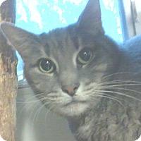 Adopt A Pet :: Tammy - Milford, MA