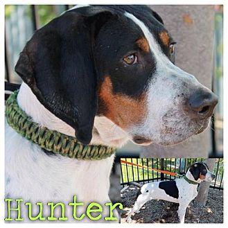 Hound (Unknown Type) Mix Dog for adoption in Garden City, Michigan - Hunter