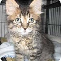 Adopt A Pet :: Chloe - Shelton, WA