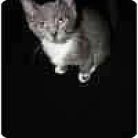 Adopt A Pet :: Scrabble & Scribble - Lake Ronkonkoma, NY