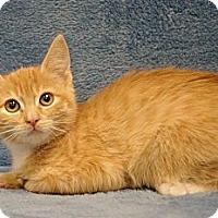 Adopt A Pet :: Hay There - Sacramento, CA