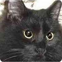 Adopt A Pet :: Julia - Pasadena, CA