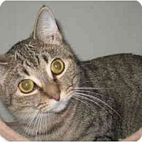 Adopt A Pet :: Maya - Acme, PA