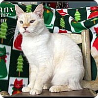 Adopt A Pet :: Tiffany - Orlando, FL