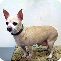 Adopt A Pet :: Luna - Port Washington, NY