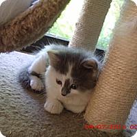 Adopt A Pet :: Kola - Acme, PA