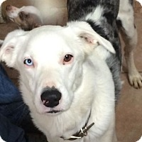 Adopt A Pet :: Murphy - GRANBURY, TX