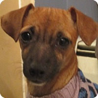 Adopt A Pet :: Roo - Bowie, MD