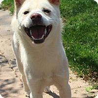 Adopt A Pet :: Jazz - Manassas, VA