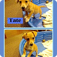Adopt A Pet :: Tate IN CT - East Hartford, CT