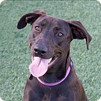 Adopt A Pet :: Ballet - San Luis Obispo, CA