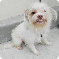 Adopt A Pet :: Binx - Umatilla, FL