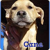 Adopt A Pet :: Cane meet me 4/15 - Manchester, CT