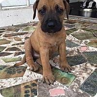 Adopt A Pet :: Benny - MIAMI, FL
