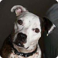 Adopt A Pet :: Nya - Ocoee, FL