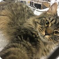 Adopt A Pet :: Tiny - Gadsden, AL
