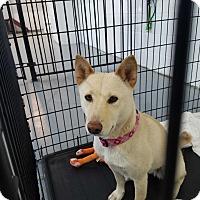 Adopt A Pet :: Jo - Las Vegas, NV