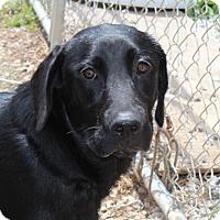Adopt A Pet :: Zoe - Harmony, Glocester, RI