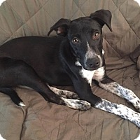 Adopt A Pet :: Faith - New Oxford, PA