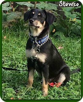 Terrier (Unknown Type, Medium)/Hound (Unknown Type) Mix Dog for adoption in Elburn, Illinois - Stewie