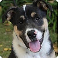 Adopt A Pet :: GARRETT - Red Bluff, CA