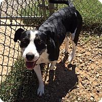 Adopt A Pet :: Rilah - Harmony, Glocester, RI