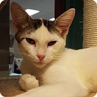 Adopt A Pet :: Xerxes - Grayslake, IL