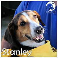 Adopt A Pet :: Stanley - Chicago, IL