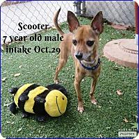 Adopt A Pet :: Scooter - Kamloops, BC