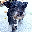 Adopt A Pet :: Maizy