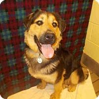 Adopt A Pet :: *LOUISE - Upper Marlboro, MD