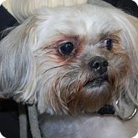 Adopt A Pet :: Dora - Brooklyn, NY