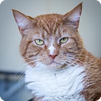 Adopt A Pet :: Biggie Smalls - Martinsville, IN