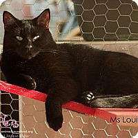Adopt A Pet :: Ms. Louie - St Louis, MO