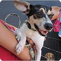 Adopt A Pet :: Colin - Alexandria, VA