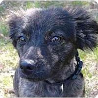 Adopt A Pet :: Hayley - Mocksville, NC