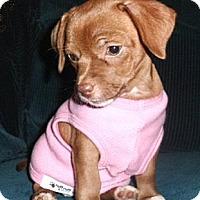 Adopt A Pet :: Giselle - Mooy, AL