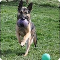 Adopt A Pet :: Tika - Hamilton, MT