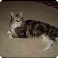 Adopt A Pet :: Madison - Irvine, CA