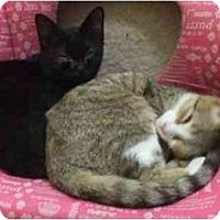 Adopt A Pet :: Squeaker - Lake Charles, LA