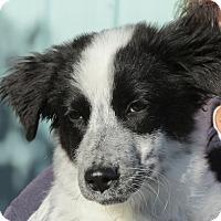 Adopt A Pet :: Raizee - Greeley, CO