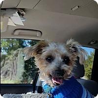 Adopt A Pet :: HENRY - Raleigh, NC