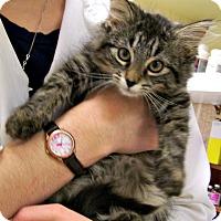 Adopt A Pet :: Snap - Toledo, OH